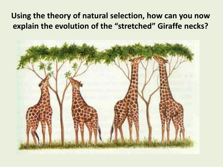 PPT - The Theory of Evolution by Natural Selection ...