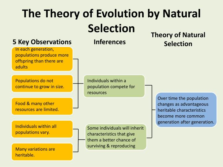 Theory Evolution Theory Evolution And Natural Selection