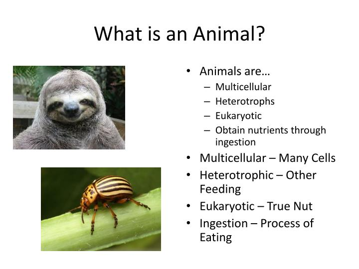 What is an animal1