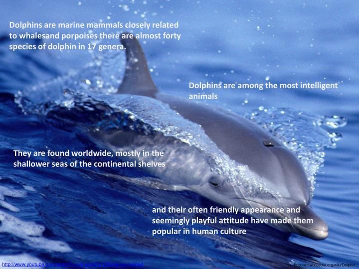 Dolphins are marine mammals closely related to