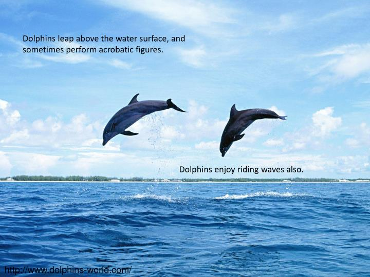 Dolphins leap above the water surface, and sometimes perform acrobatic figures.
