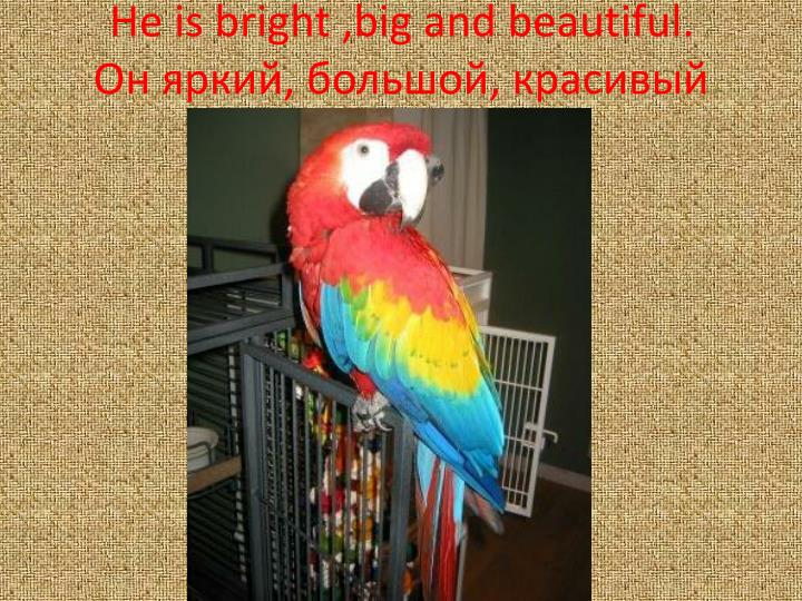 He is bright ,big and beautiful.