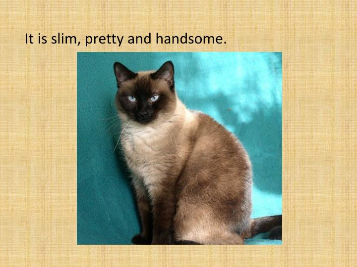 It is slim, pretty and handsome.