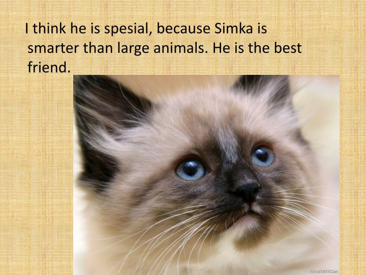 I think he is spesial, because Simka is smarter than large animals. He is the best friend.