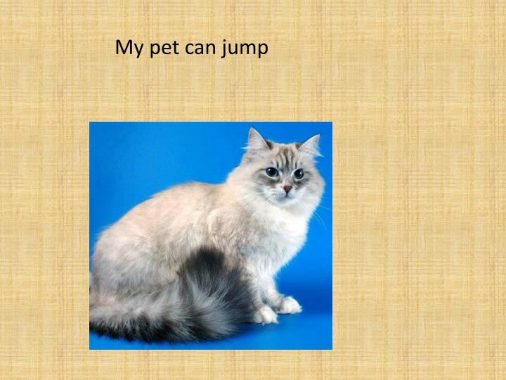 My pet can jump