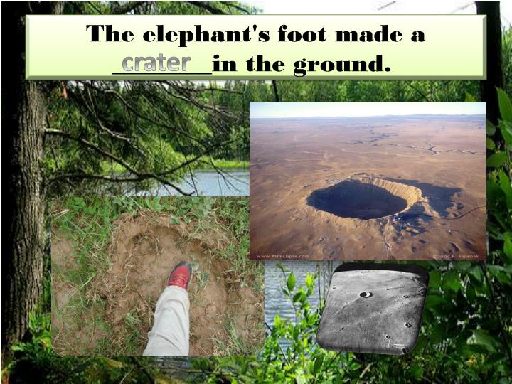 The elephant's foot made a