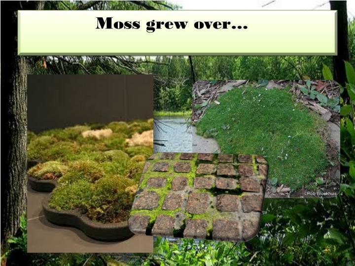 Moss grew over…