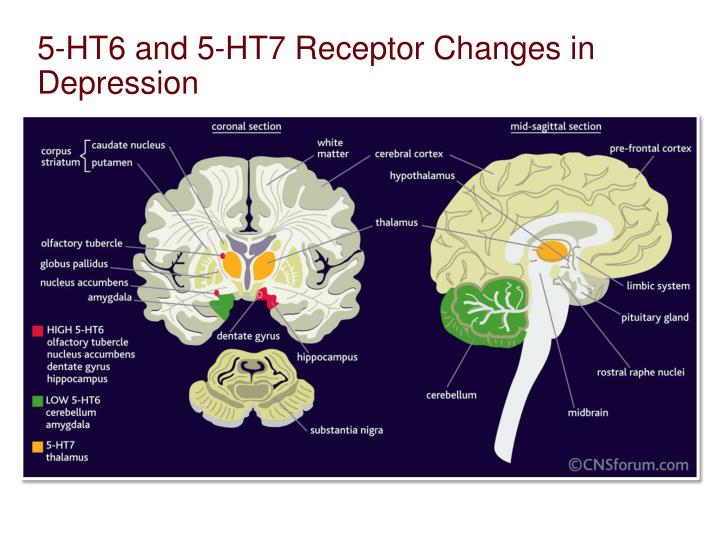 5-HT6 and 5-HT7 Receptor Changes in Depression