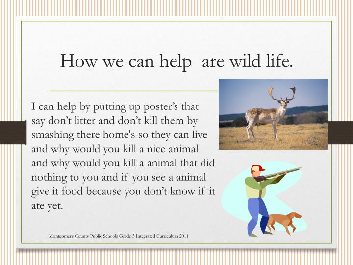 How we can help  are wild life.
