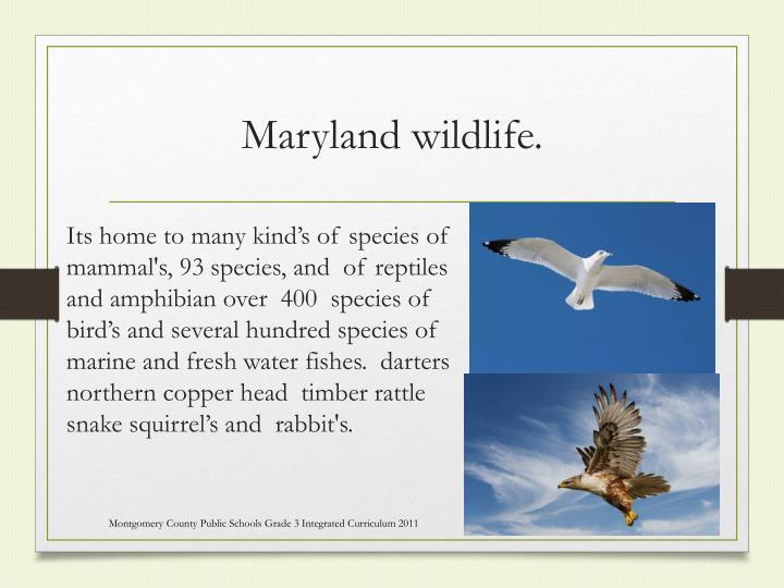Maryland wildlife.