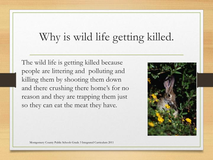 Why is wild life getting killed.