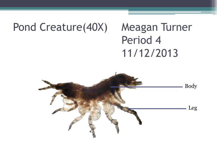 Pond Creature(40X)