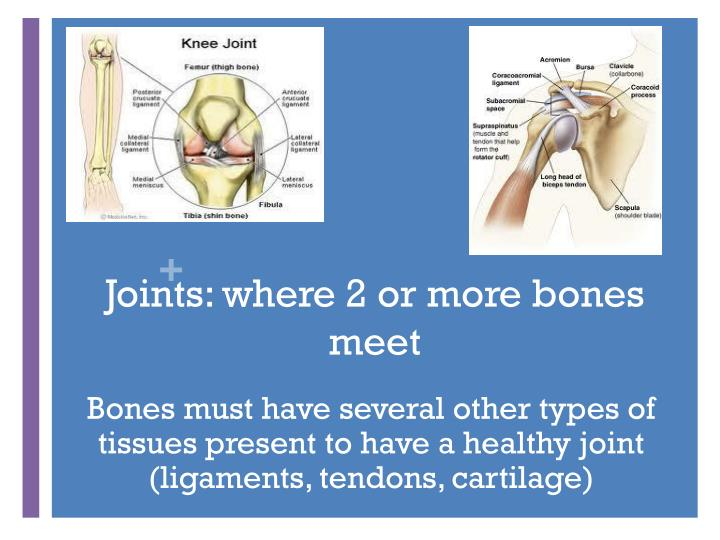 Joints: where 2 or more bones meet