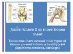 joints where 2 or more bones meet