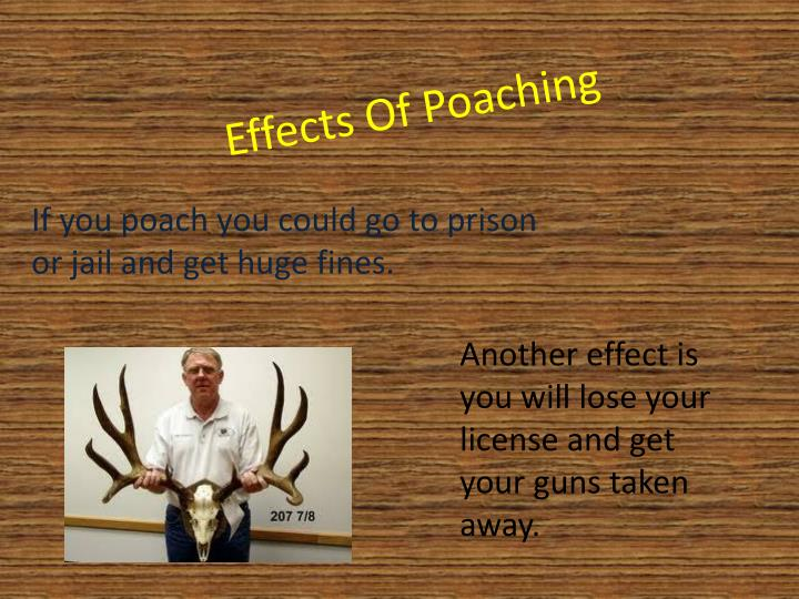 Effects Of Poaching