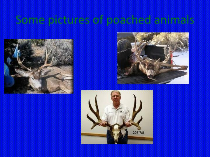 Some pictures of poached animals