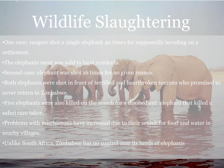 Wildlife Slaughtering