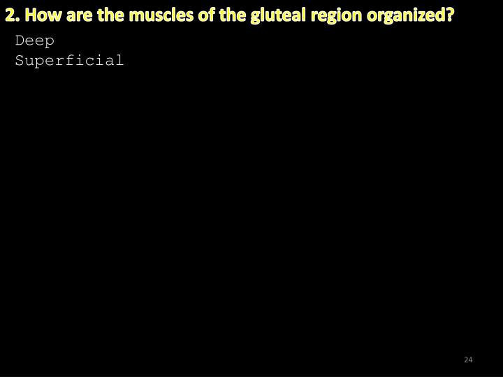2. How are the muscles of the gluteal region organized?
