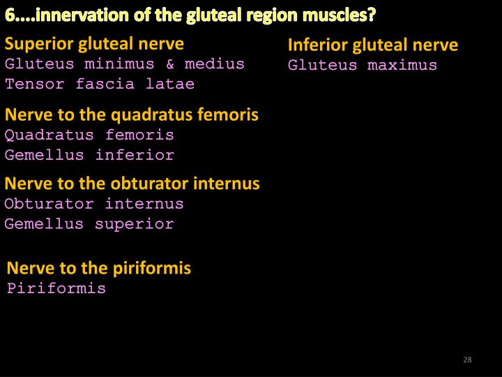 6....innervation of the gluteal region muscles?