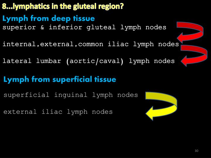 8...lymphatics in the gluteal region?