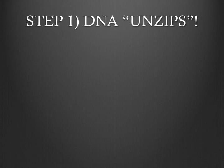 "STEP 1) DNA ""UNZIPS""!"