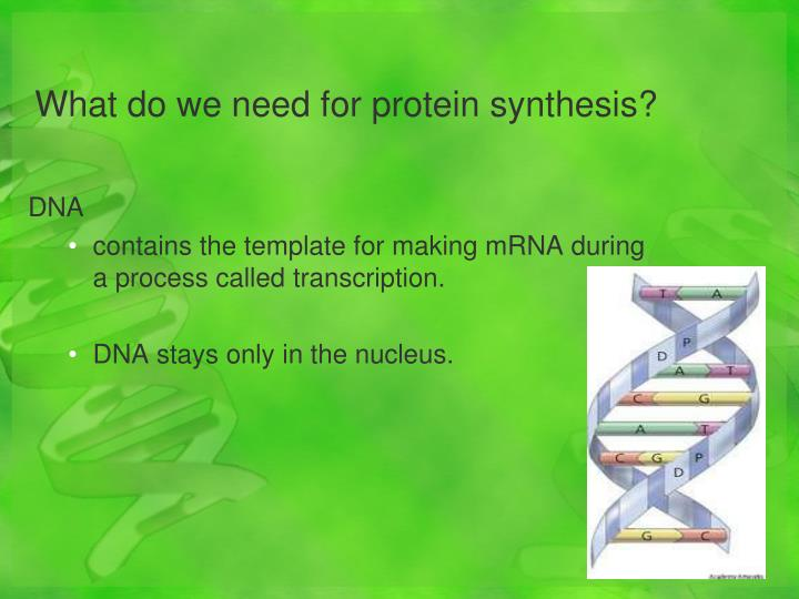 What do we need for protein synthesis?