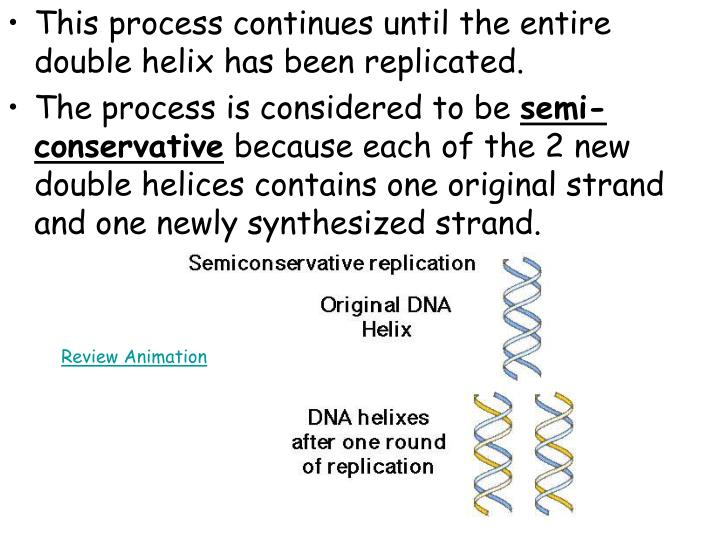 This process continues until the entire double helix has been replicated.