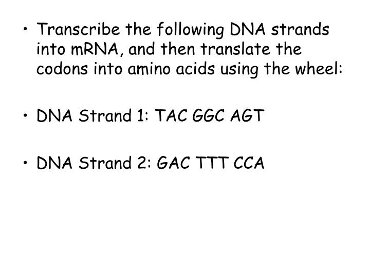 Transcribe the following DNA strands into mRNA, and then translate the codons into amino acids using the wheel: