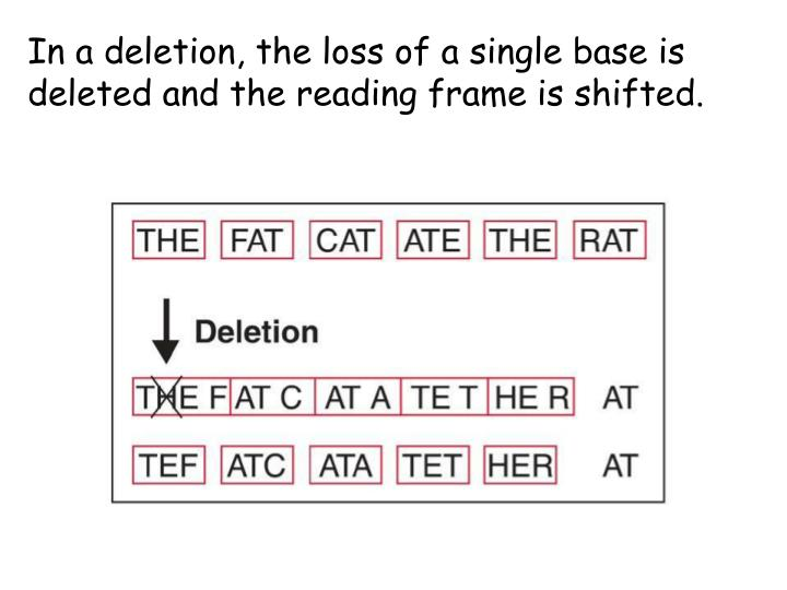 In a deletion, the loss of a single base is deleted and the reading frame is shifted.