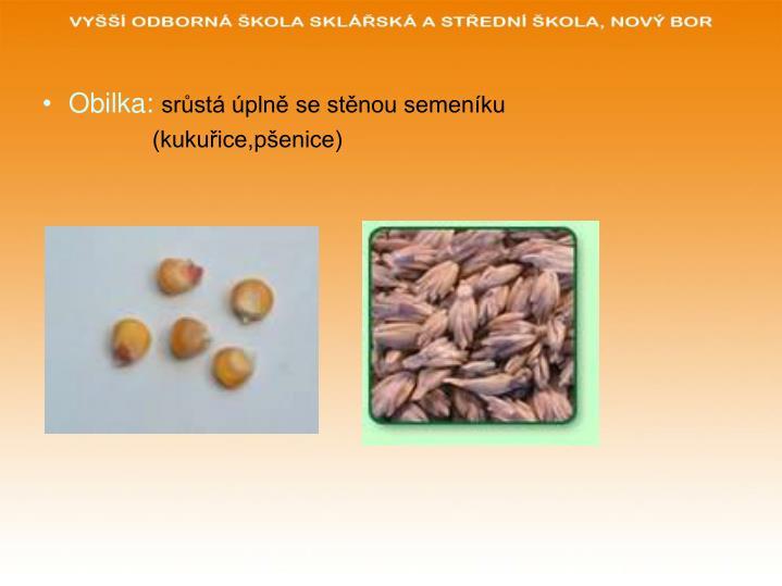 Obilka: