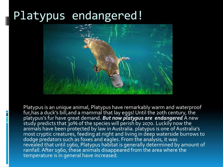 Platypus endangered!