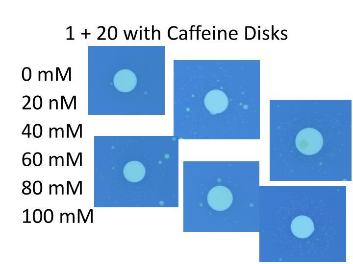 1 + 20 with Caffeine Disks