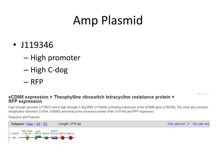 Amp Plasmid