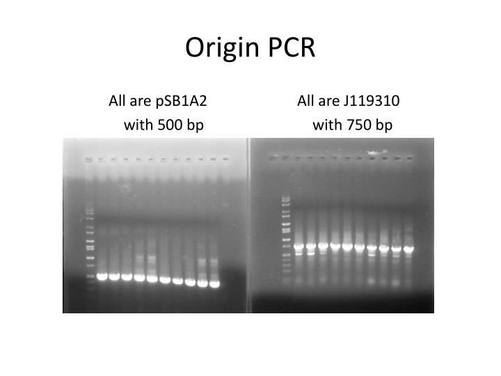 Origin PCR