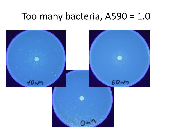 Too many bacteria, A590 = 1.0