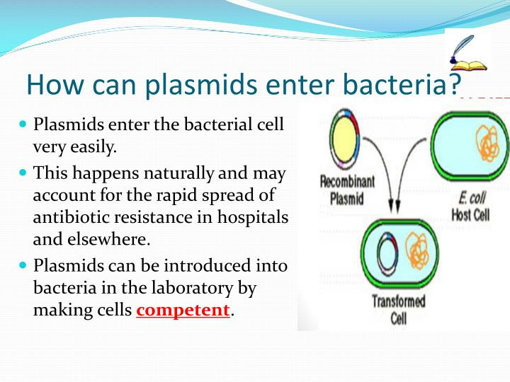 How can plasmids enter bacteria?