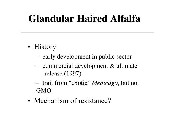 Glandular Haired Alfalfa