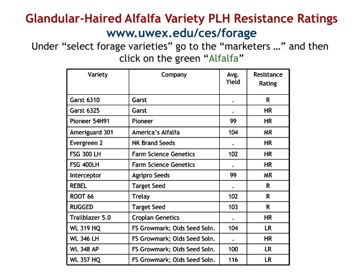 Glandular-Haired Alfalfa Variety PLH Resistance Ratings