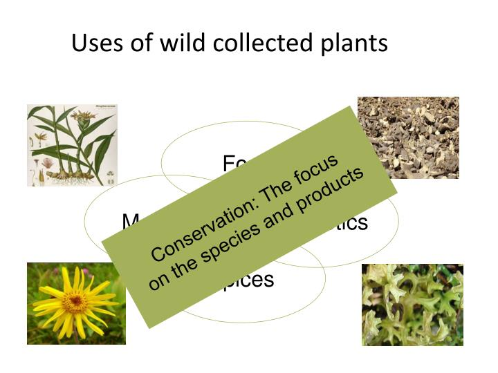 Uses of wild collected plants