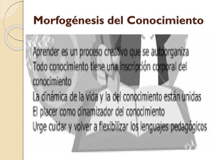 Morfogénesis del Conocimiento