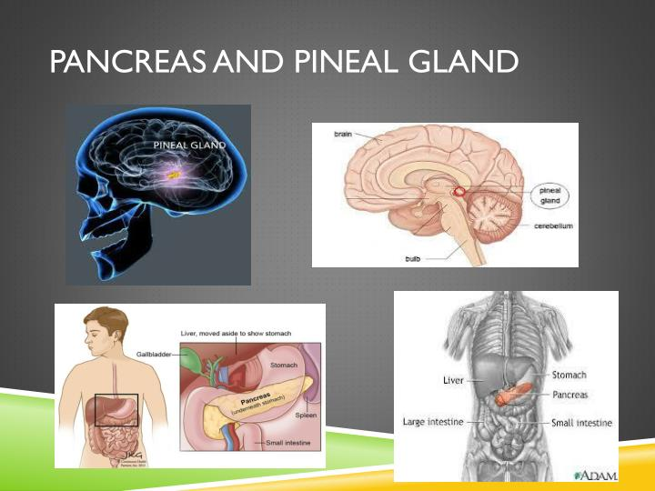 Pancreas and Pineal