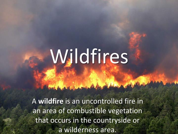 wildfires uncontrolled fires essay