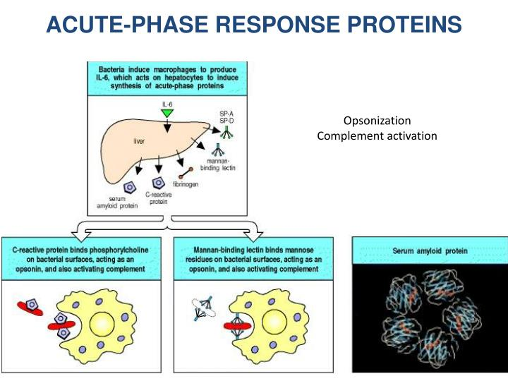 ACUTE-PHASE RESPONSE PROTEINS