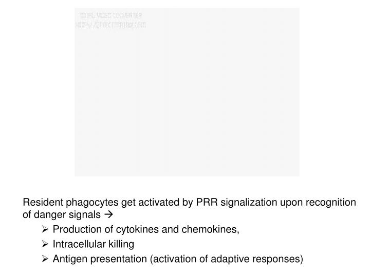 Resident phagocytes get activated by PRR signalization upon recognition of danger signals
