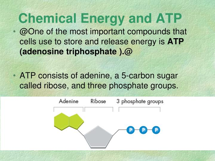 Chemical energy and atp1