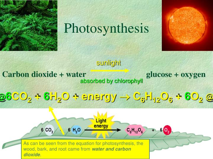 As can be seen from the equation for photosynthesis, the wood, bark, and root came from