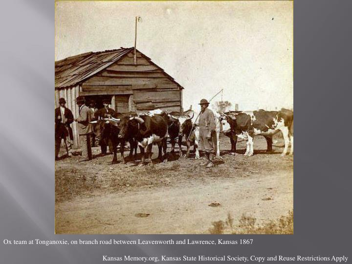 Ox team at Tonganoxie, on branch road between Leavenworth and Lawrence, Kansas 1867