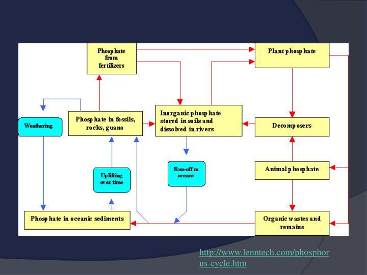 http://www.lenntech.com/phosphorus-cycle.htm