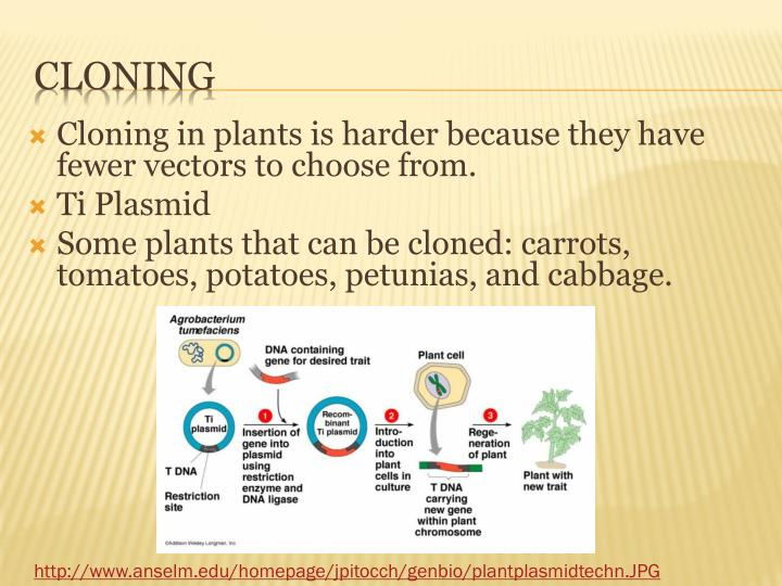 Cloning in plants is harder because they have fewer vectors to choose from.