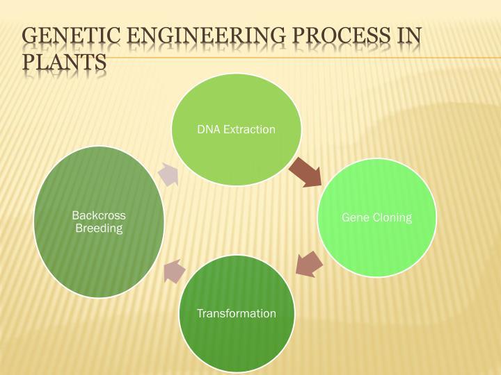 Genetic Engineering Process in Plants